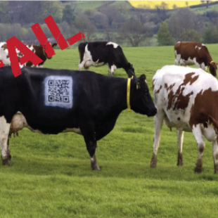 Increase engagement with these 5 must-know QR Code best practices
